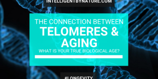 telomeres-and-ageing